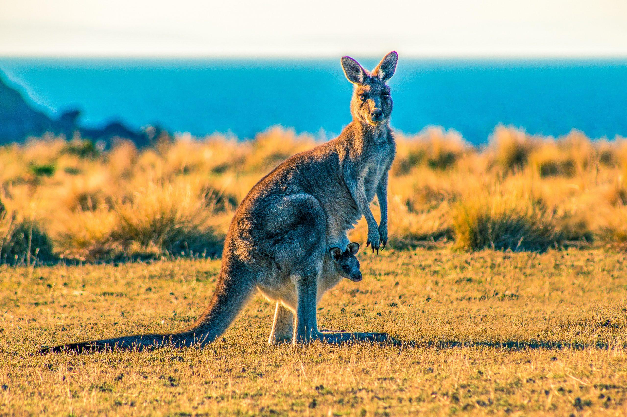 Am I an Australian resident for tax purposes?